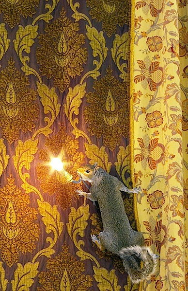 squirrelllamp.jpg