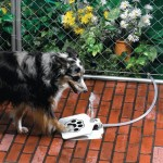 Self Watering Dog Fountain