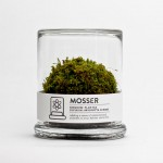 Moss Terrarium Brings A Little Simply Green to Your Space