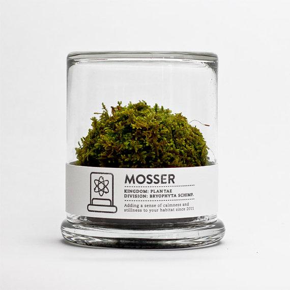 MOSSER scientific glass moss terrarium and spray bottle