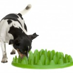 Curb Canine Gluttony With Green Interactive Feeder
