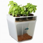 Beautiful Aquaponics Kickstarter Reaches Goal
