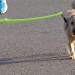 Cyclist's Dog Walker