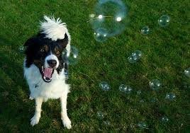 bacon flavored bubble machine for dogs